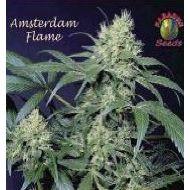 Amsterdam Flame