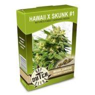 Hawaii x Skunk #1